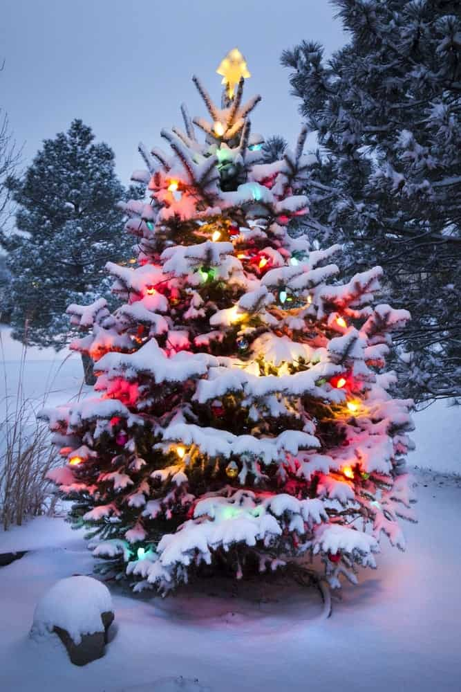 Christmas tree decorated with lights covered in snow