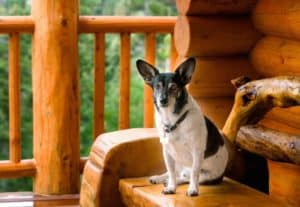 A dog sitting on a bench outside of a log cabin.