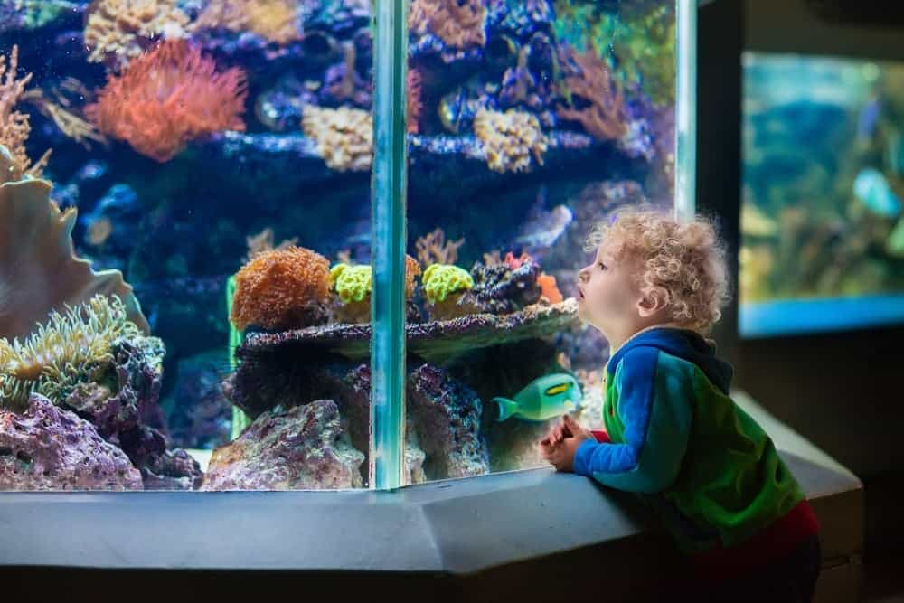 A toddler admiring the fish at an aquarium.